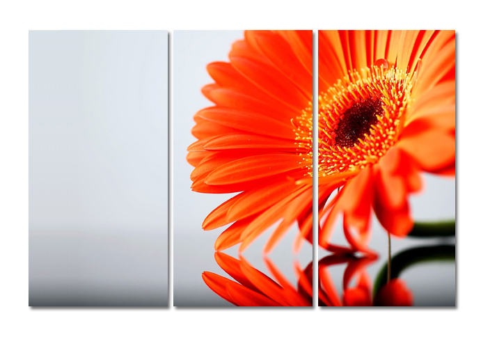 Leinwandbild Orange Blume